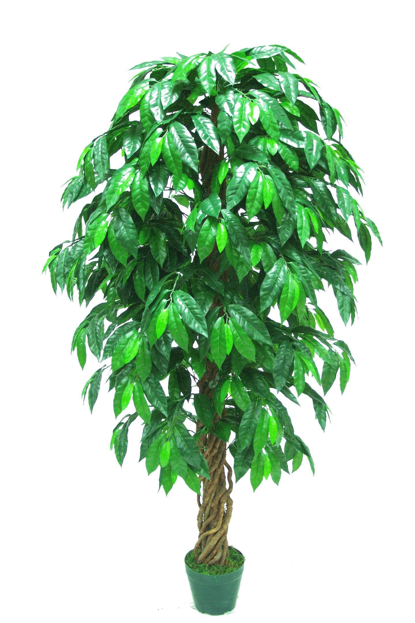 Imate li neku egzotičnu biljku? 1T15D5%27447%205%27%20Coffee%20L984